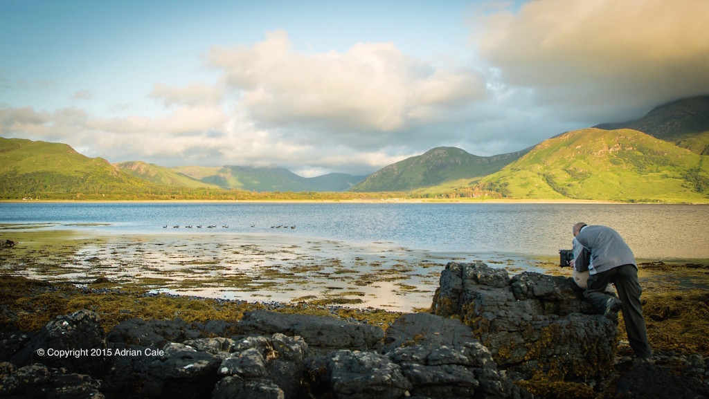 Filming geese on the Isle of Mull