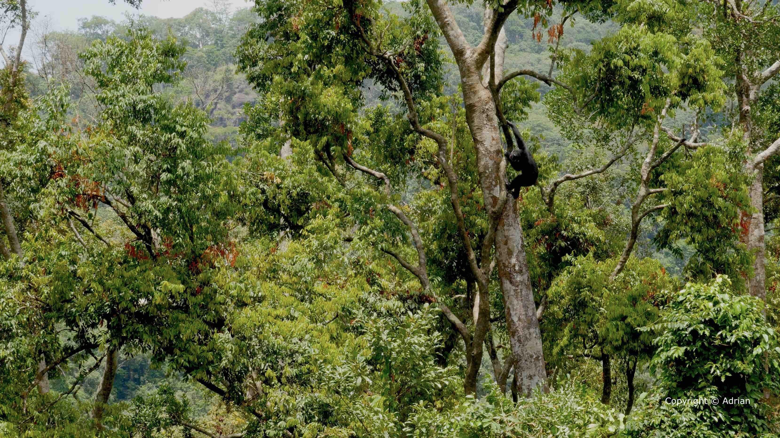 Chimp School – Nat Geo Wild US Trailer   Adrian Cale